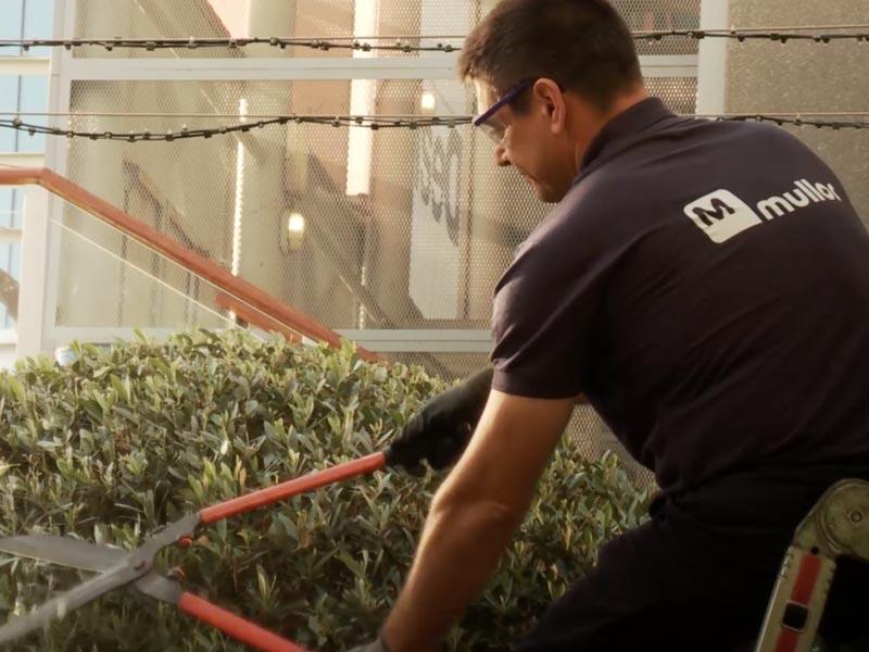 servicio-auxiliar-jardinero-mullor
